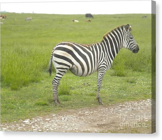 Zebra Print Canvas Print by Tessa Priddy