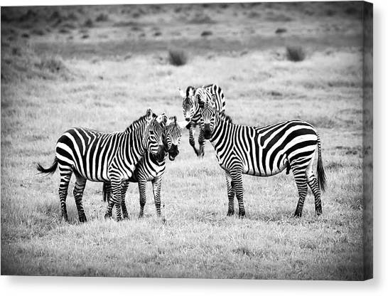 Fun Canvas Print - Zebras In Black And White by Sebastian Musial