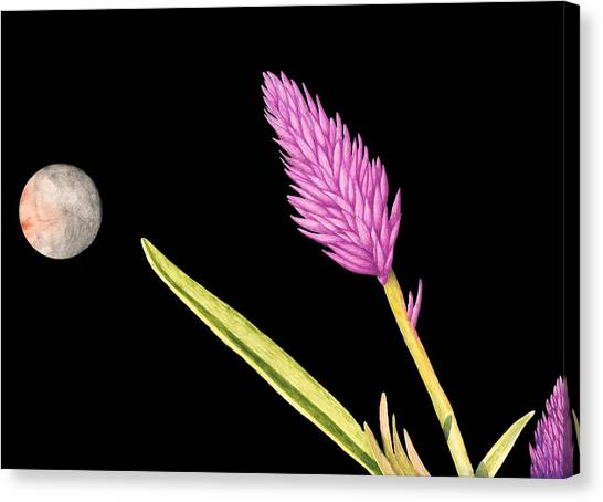 Zen Moon Canvas Print by Norm Holmberg