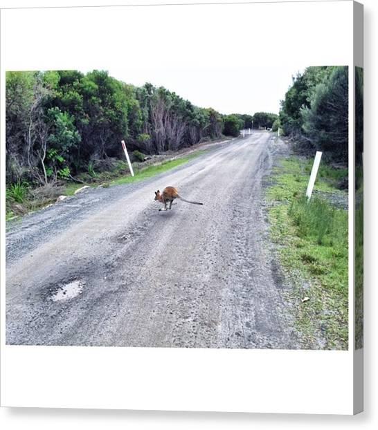 Kangaroo Canvas Print - ™ #aussie #australia #kangaroo by Yulia Syrkin