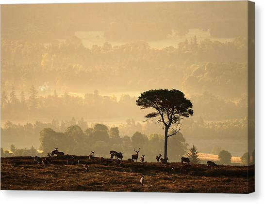 Autumn Morning, Strathglass Canvas Print