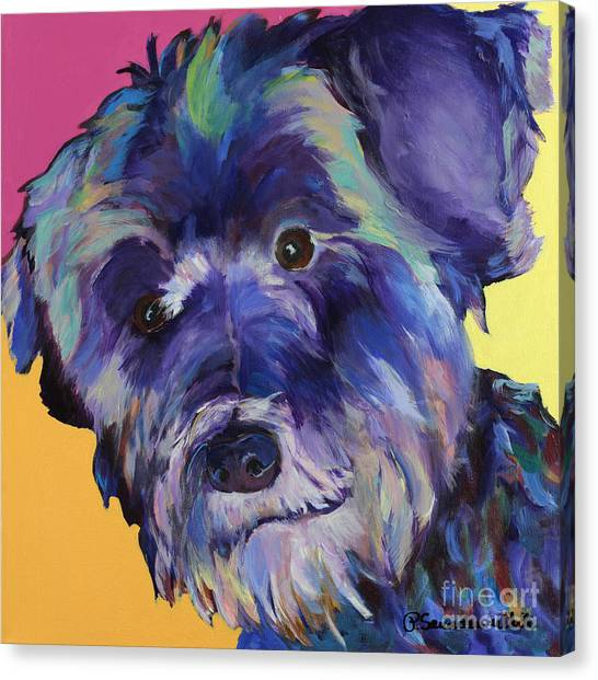 Schnauzers Canvas Print -  Beau by Pat Saunders-White