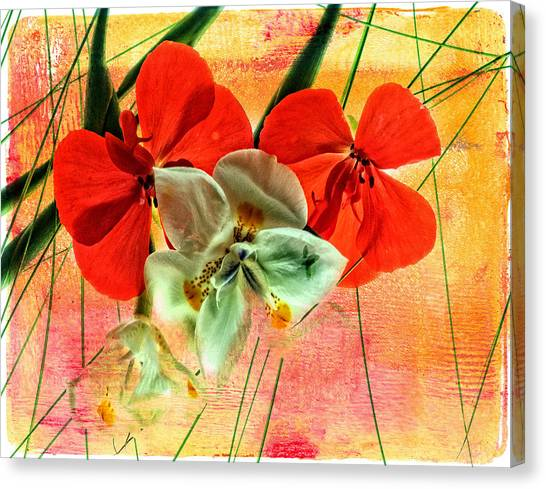 Bougainvillea And Paper White Canvas Print