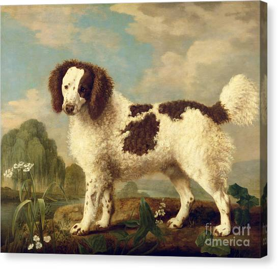 Doggy Canvas Print -  Brown And White Norfolk Or Water Spaniel by George Stubbs