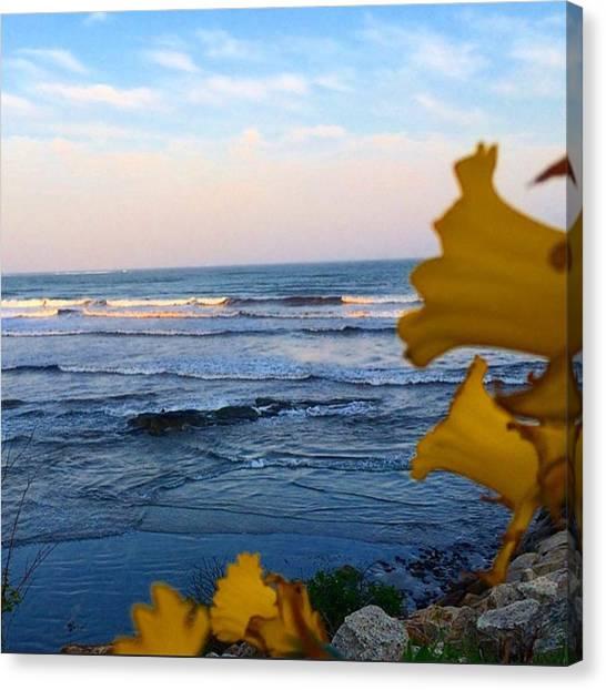 Rihanna Canvas Print - 🎵 Find Light In The Beautiful Sea, I by Amanda Brayman