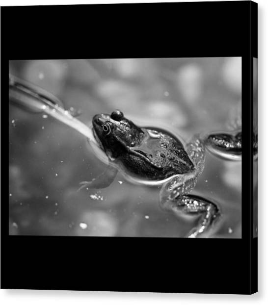 Frogs Canvas Print - 🐸 Froschn. 