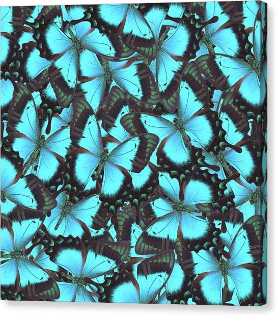 Green Swallowtail Butterfly Canvas Print
