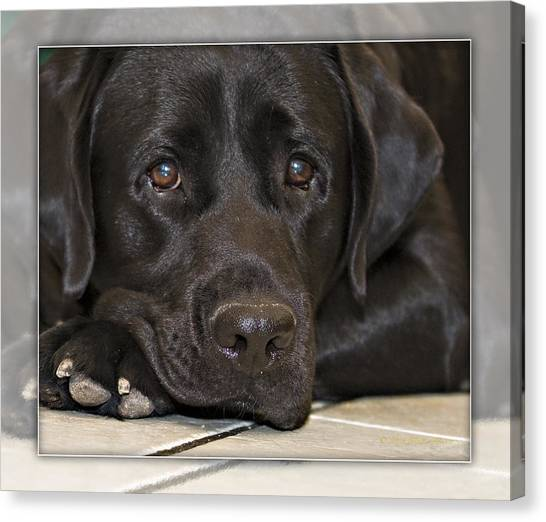 Labrador Retriever A1a Canvas Print