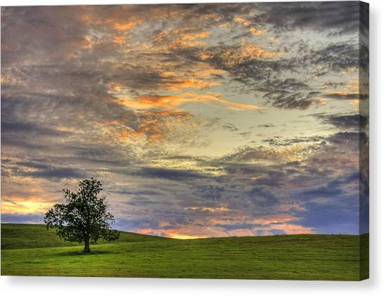 Sunset Horizon Canvas Print - Lonley Tree by Matt Champlin
