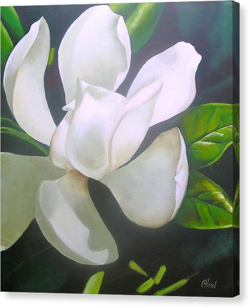 Magnolia Delight Painting Canvas Print
