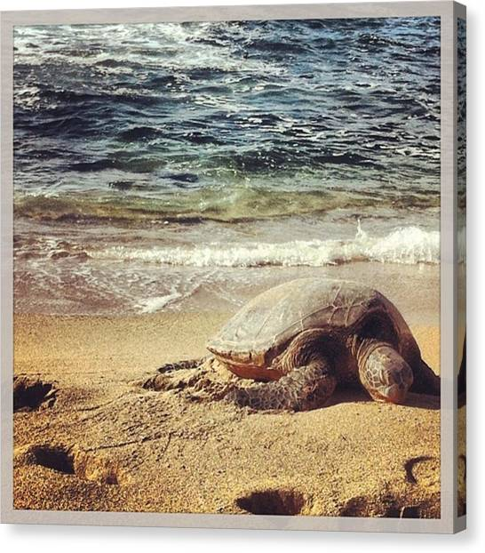 Sea Turtles Canvas Print - Naps by Amanda McCracken