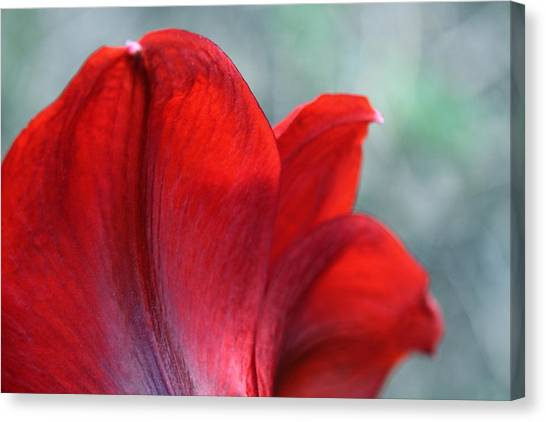 Mprints - Perfect Petal Canvas Print by M  Stuart