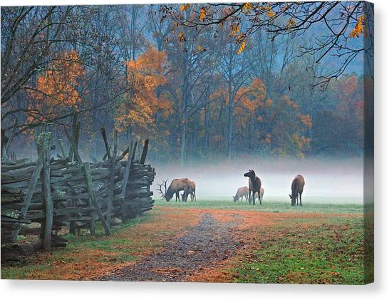 Oconaluftee Visitor Center Elk Canvas Print