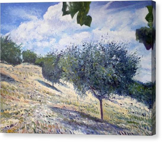 Olive Grove At Monte Cardeto Lazio Italy 2009  Canvas Print by Enver Larney