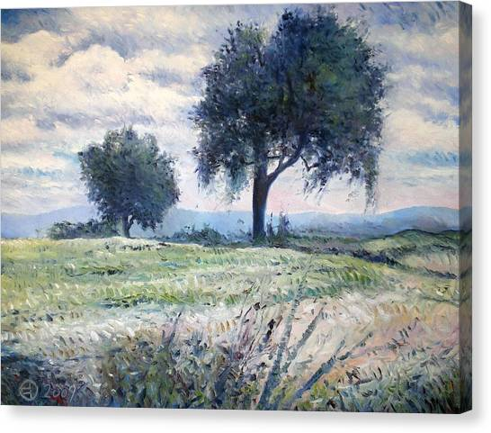 Olive Trees At Monte Cardeto Italy 2009  Canvas Print by Enver Larney