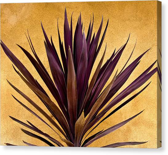 Cacti Canvas Print -  Purple Giant Dracaena Santa Fe by John Hansen