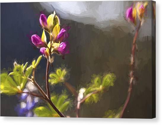 Lavendar Canvas Print -  Right Side Up II by Jon Glaser