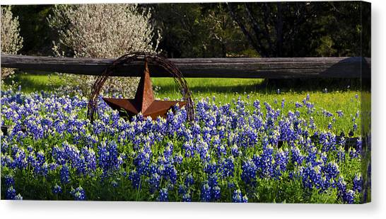 Texas Bluebonnets IIi Canvas Print