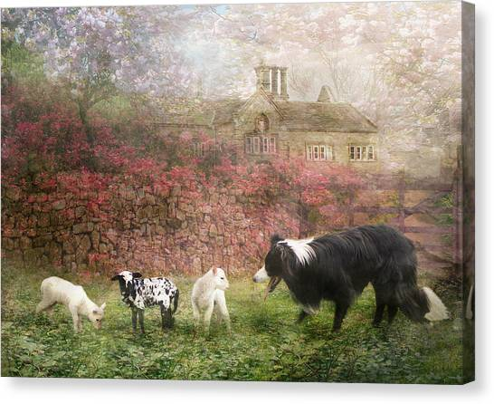 Border Collies Canvas Print -  The Babysitter by Trudi Simmonds