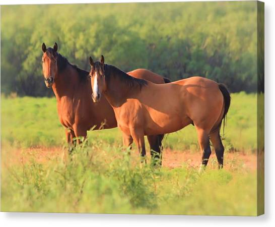 Two Horses Watching Canvas Print