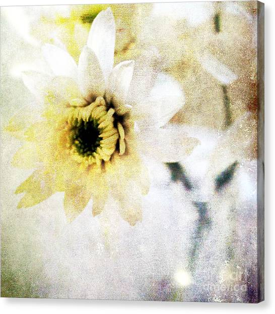 Daisy Canvas Print -  White Flower by Linda Woods