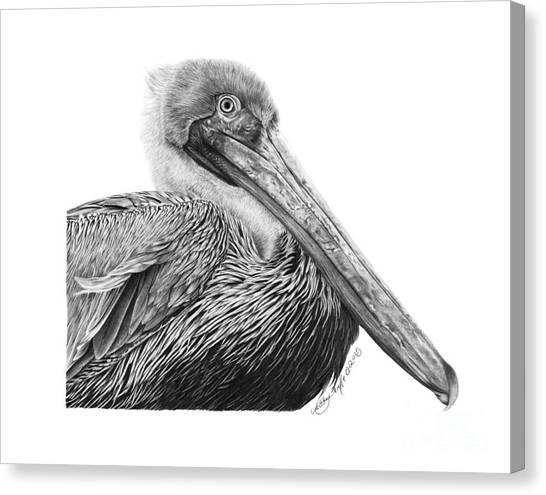 047 - Sinbad The Pelican Canvas Print