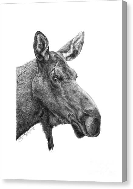048 - Shelly The Moose Canvas Print