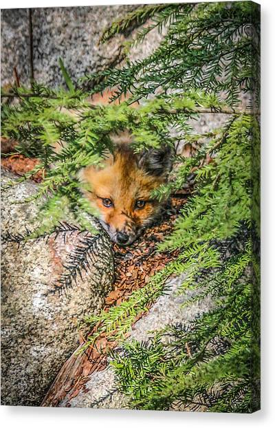 #0527 - Fox Kit Canvas Print