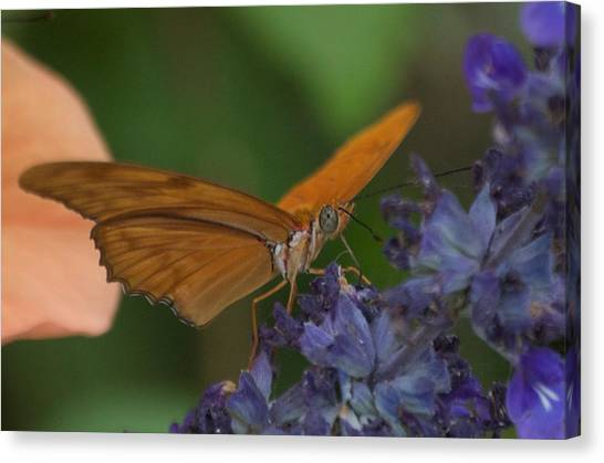 A Butterfly Sipping Nectar 1 Canvas Print by Susan Heller