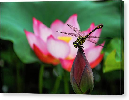 A Dragonfly On Lotus Flower Canvas Print