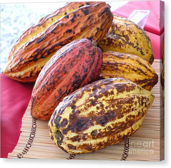 A Pile Of Cacao Pods Canvas Print