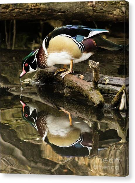A Sip For You And Me Wildlife Art By Kaylyn Franks Canvas Print