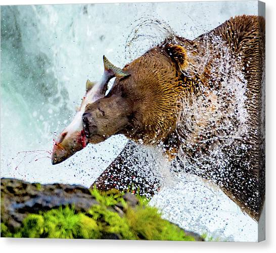 Canvas Print featuring the photograph Alaska Brown Bear by Norman Hall
