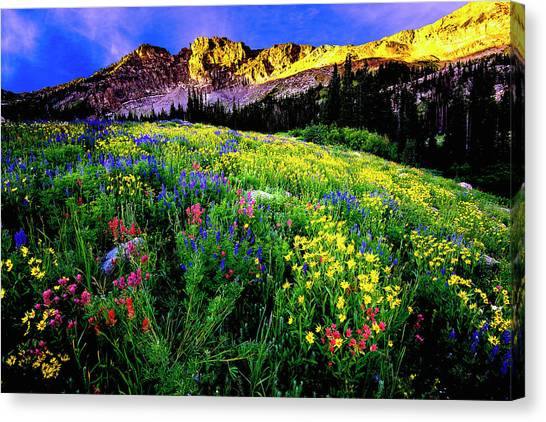 Canvas Print featuring the photograph Albion Basin by Norman Hall