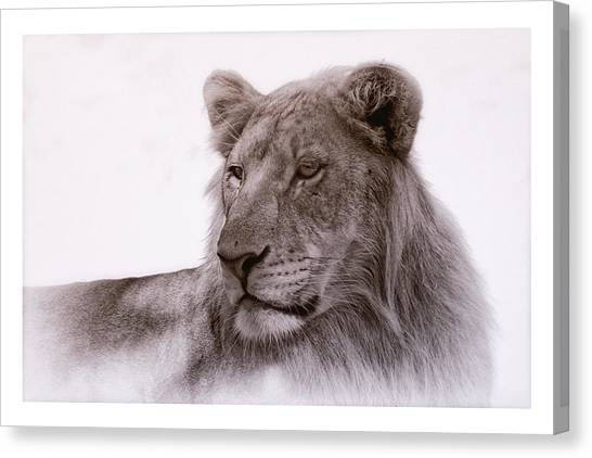 Canvas Print featuring the photograph All Grown Up by Elaine Malott