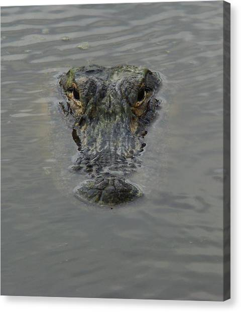 Alligator One Canvas Print
