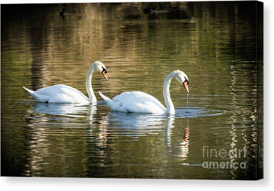 Always Together Wildlife Art By Kaylyn Franks Canvas Print