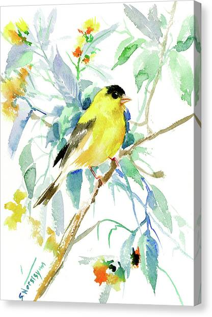 Finches Canvas Print - American Goldfinch by Suren Nersisyan