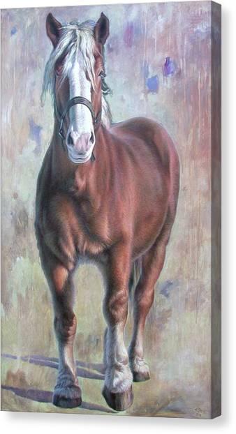 Arthur The Belgian Horse Canvas Print