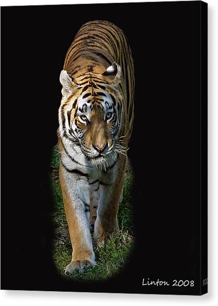Asian Tiger Canvas Print