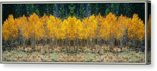 Canvas Print featuring the photograph Aspen Stand by Sherri Meyer