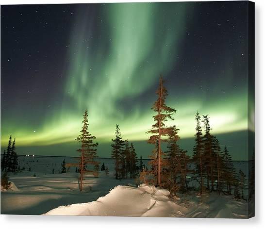 Aurora Borealis Canvas Print - Aurora Borealis by Maye Loeser