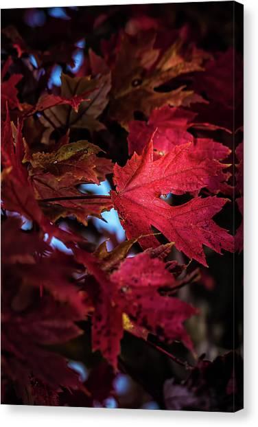 Canvas Print - Autumn Colors by Elijah Knight