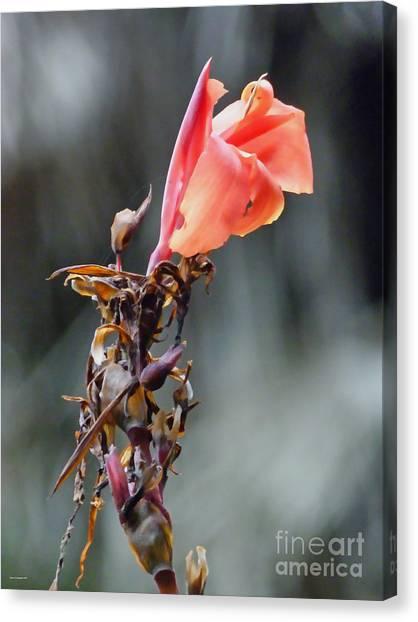 Autumn Flower  Canvas Print by Jason Christopher