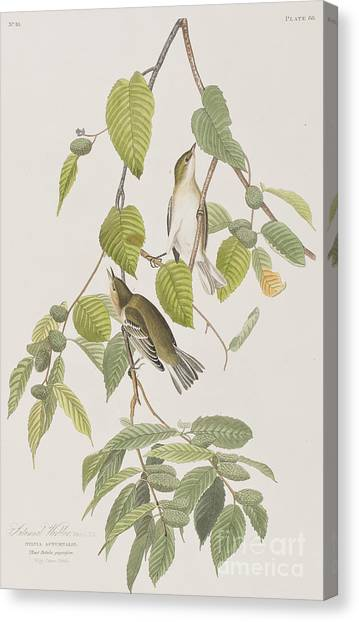 Warblers Canvas Print - Autumnal Warbler by John James Audubon