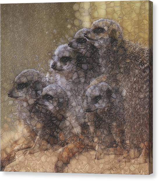 Meerkats Canvas Print - Aware by Jack Zulli