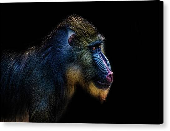 Southern Africa Canvas Print - Baboon by Martin Newman