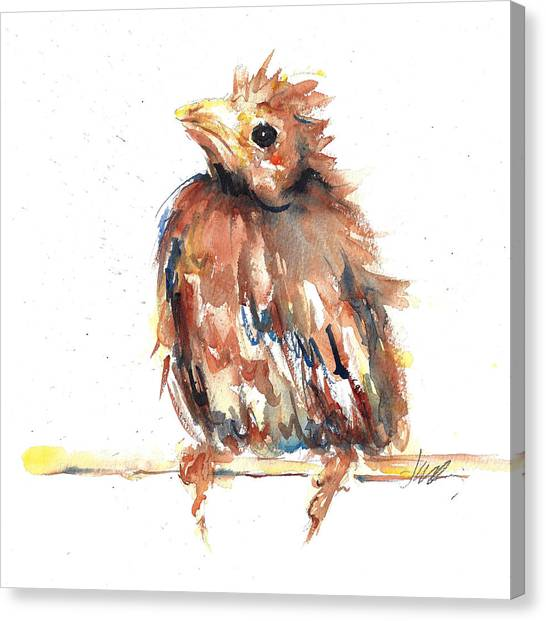 Baby Cardinal - New Beginnings Canvas Print