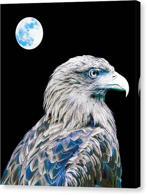 Eagle Scout Canvas Print - Bald Eagle  by Celestial Images