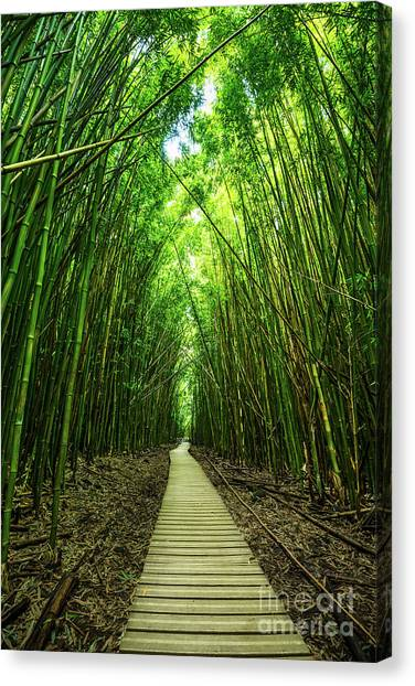 Bamboo Canvas Print - Bamboo Forest by Jamie Pham